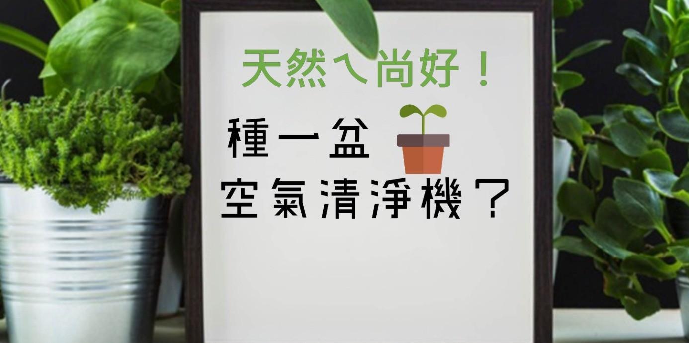 【關健報】天然ㄟ尚好,種一盆「空氣清淨機」